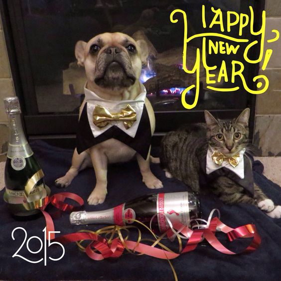 Happy New Year.  Roxy the French Bulldog in her Tux with Dubbs the cat.