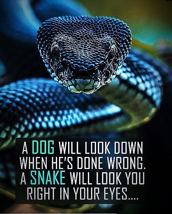 Snake Friends Quotes : snake, friends, quotes, Really, Snake, Quotes,, Joker, Friends