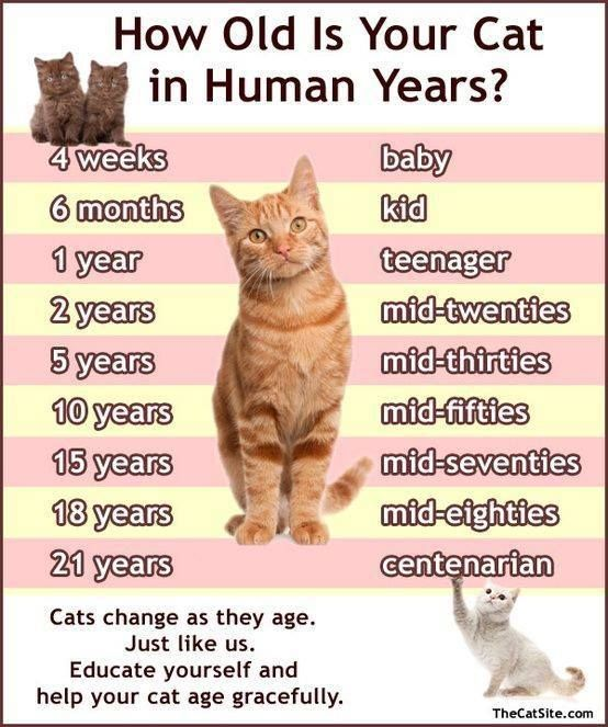 How Old Is Your Cat In Human Years Cute Funny Cat Kitten Pictures Videos Cat Ages Cat Years Cats