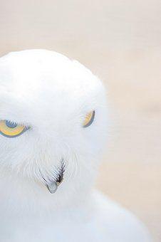 'Schn eee ule...333' ein Foto von 'birdy`s'