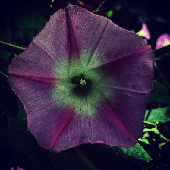 vasárnap készült fotó, egy barátommal ugyan ezt a virágot fotóztuk :)