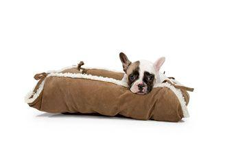 Französische Bulldogge-Welpe in Hundesofa ASPEN SNAPBED