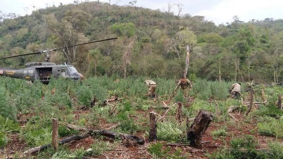 #Destruyen 286 toneladas de marihuana en el Amambay - Radio Ñanduti: Radio Ñanduti Destruyen 286 toneladas de marihuana en el Amambay Radio…