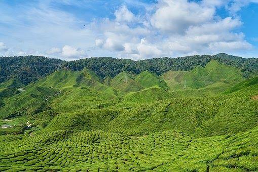 Kebun Anggur Di Sumatera Utara
