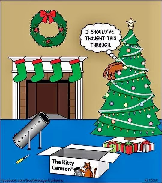 Pin By Heidi Aeschlimann On Christmas Cute Funny Animals Christmas Humor Christmas Memes