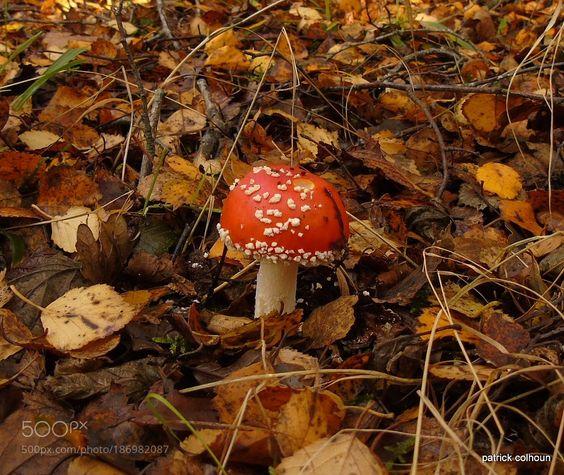 mushroom by paba1