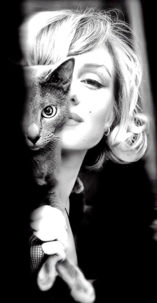 Marilyn Monroe and her cat. | Marilyn monroe, Marilyn, Black and 