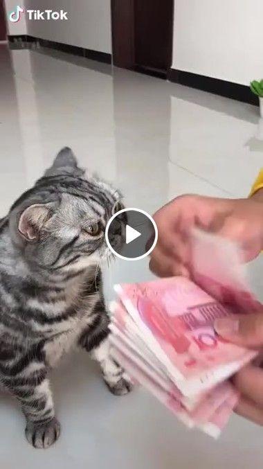 Eu ajudando mamãe contar o dinheiro