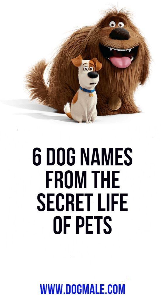 6 Dog Names From The Secret Life Of Pets Dog Names Secret Life