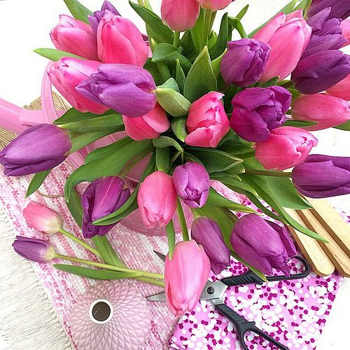 Pink Tulips.