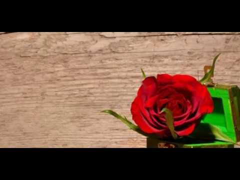 التعبير عن الحب بصمت Flowers Rose Plants
