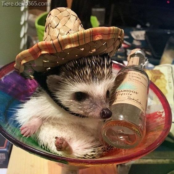 Incredible A cute rug hedgehog-ad_1] Unglaubliche Ein süßer Vorleger Igel Incredible A cute rug hedgehog #rug -#eyelashescartoon #eyelashesdesign #eyelashesfalse #eyelashesserum #eyelashesvolume