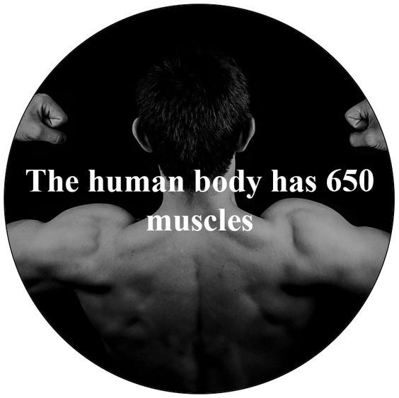 #muscles #fitness #body
