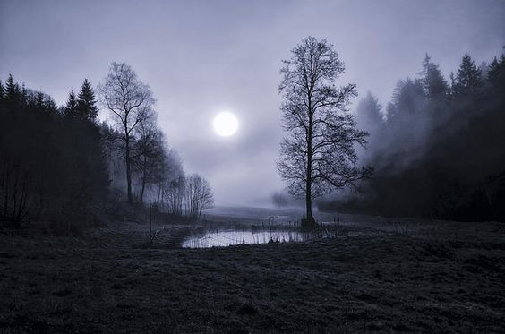 A small pond surrounded by fog.