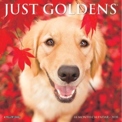 Just Goldens 2020 Calendar Twelve Outstanding Full Color