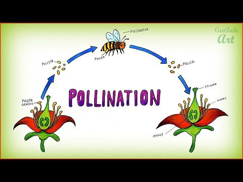 How To Draw Pollination Of Flowers Diagram Step By Step Easy Science Project Save The Bees Youtube Easy Science Projects Save The Bees Pollination