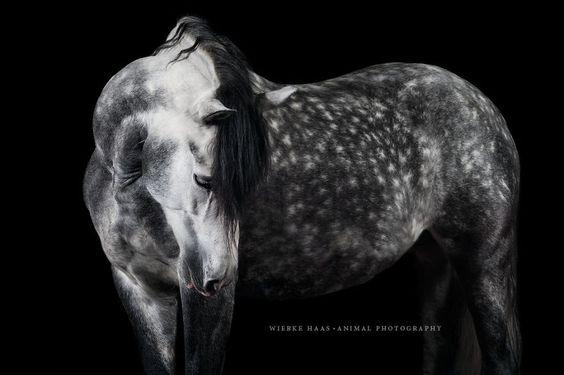 Les magnifiques photos de chevaux de Wiebke Haas  2Tout2Rien