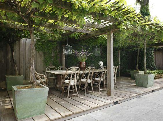 Een druif als klimplant een die in de herfst mooi rood blad krijgt g a r d e n pinterest - Pergola klimplant ...