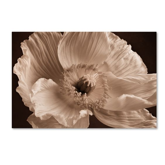 Cora Niele 'Sepia Poppy I' Canvas Art