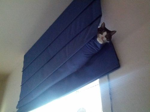 Oh, Human, I just love what you've done with the window treatments!