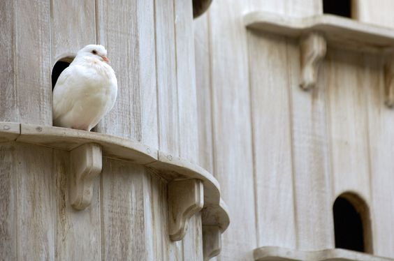 Fed Doves Won't Be Able to Rule the Roost Forever.