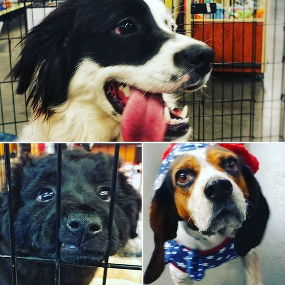 All Weekend At The Anderson Sc Petsmart Adoption Event Come Rescue A New Best Friend Andersonsc Petsmart Picme Iadopt Anderson Sc Petsmart Best Friends
