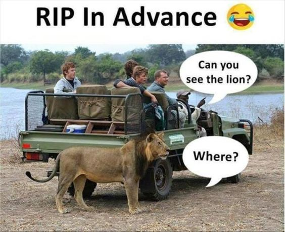 can you see the lion
