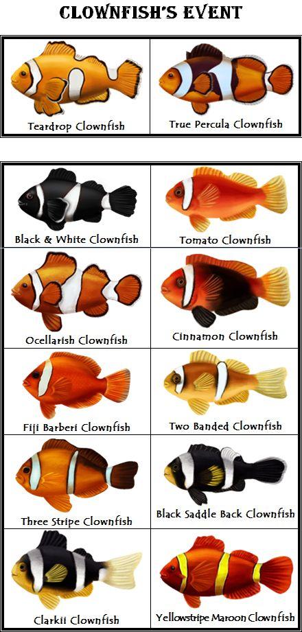 Designer clownfish chart - photo#8