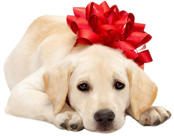 Christmas Puppies Photos