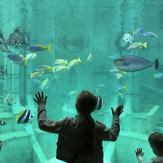 7 Reasons You Should Visit SeaWorld San Diego