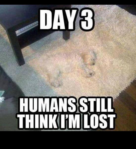 Day  Dog Hidden In Rug