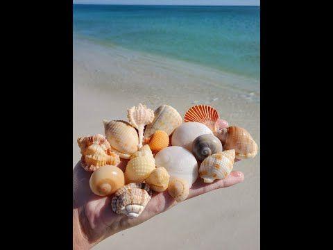 Pin On Shells Beaches