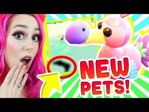 New Adopt Me Dodo Bird New Dinosaur Egg Pets Revealed Adopt Me Roblox Youtube Dinosaur Eggs Roblox Adoption
