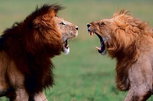 A Leo and his ego Are always face to face: That roaring need for attention, That clawing need for space.  But the battle is already fought, And victory already won, When Leo Loves from the Heart, As a Child of the Sun.