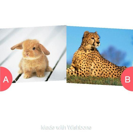 Bunny or cheetah