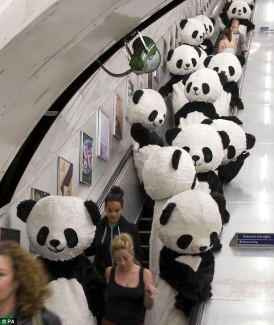 riding escalator with pandas