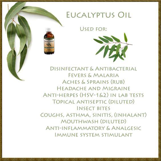 Eucalyptus essential oil!