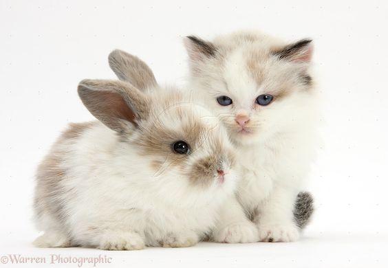 cute rabbit and kitten - Google Search | Cute Animals ...