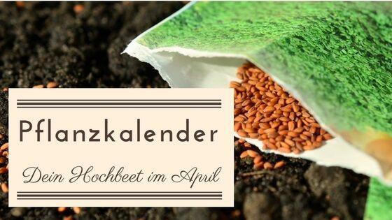 Pflanzkalender Dein Hochbeet Garten Im April Pflanzkalender Hochbeet Und Pflanzen