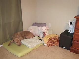 crib mattress bed for dogs dog dog pinterest unique dog beds for dogs and dog beds. Black Bedroom Furniture Sets. Home Design Ideas