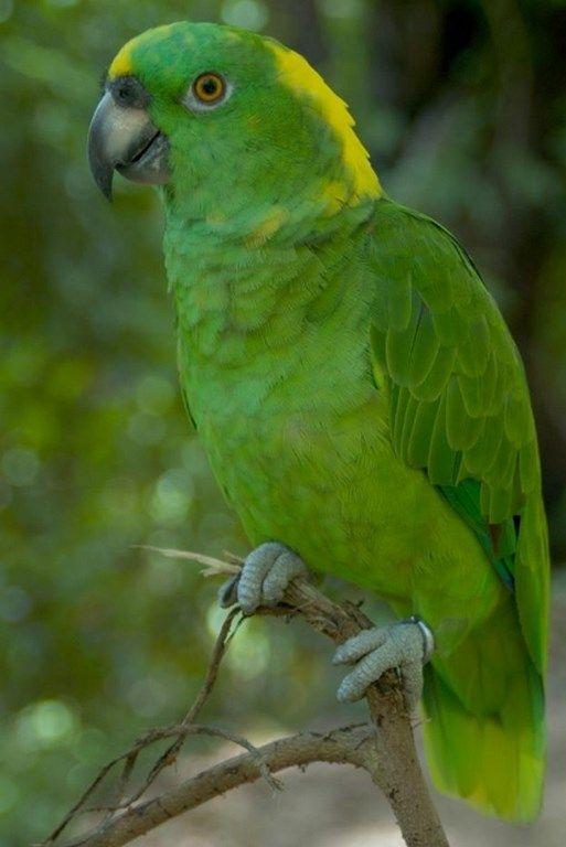Clic Para Ampliar En 2020 Aves Aves Tropicales Fotos De Aves