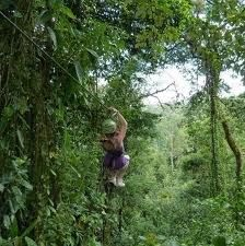 I want to go zip lining through a rainforest.