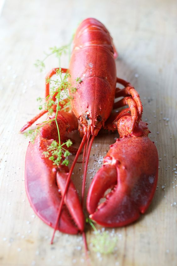 Lobster - we're using it in Lobster Ravioli with Lemon Butter, Asparagus, and Soft Herbs @ Union Square Cafe