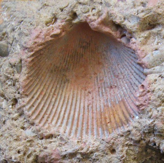 Fossil on Pinterest