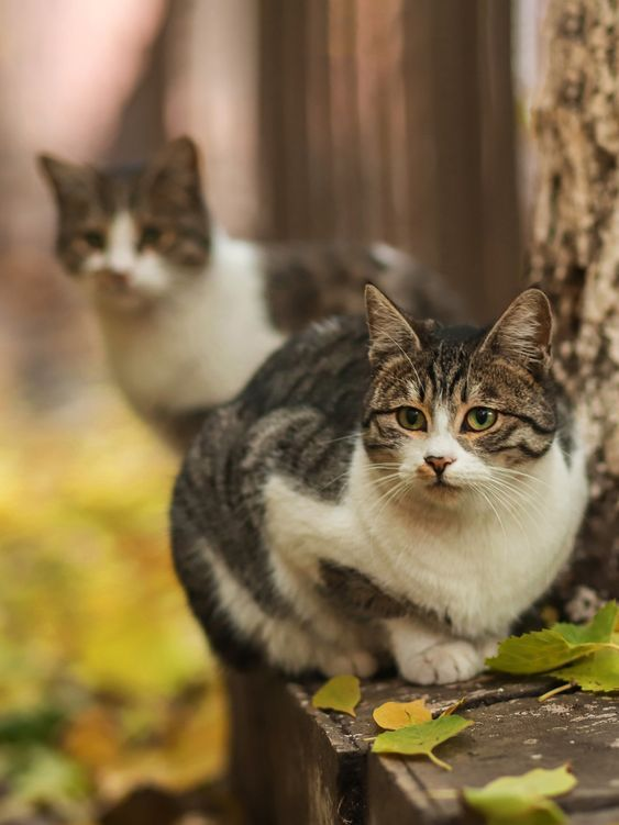 Spay Neuter Awareness Month The History Of Spaying And Neutering Pets Pets Cute Animals Cats Kittens