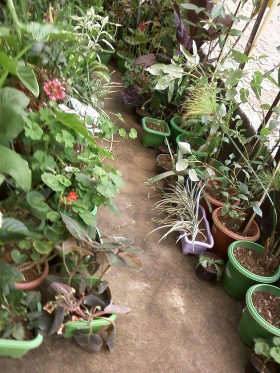 Minhas plantinhas