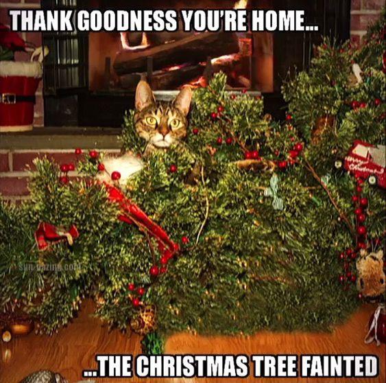 Christmas Tree O Christmas Tree....oops!! 🌲🌲🌲 #catmus #christmastree #oops ⭐️www.CatStuffWeLove.com⭐️