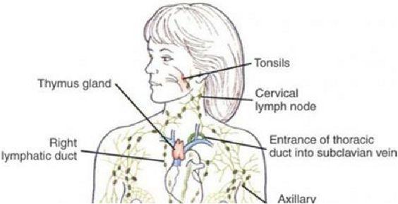 Quand est-ce la dernière fois que vous avez drainés les fluides lymphatiques ?