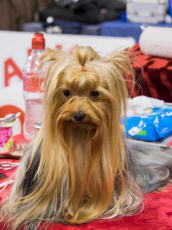 5º Salón del Animal de Compañía, Mi Mascota | 26 y 27 de noviembre de 2016 en el Palacio de Ferias y Congresos de Málaga (Fycma) | www.feriamimascota.com