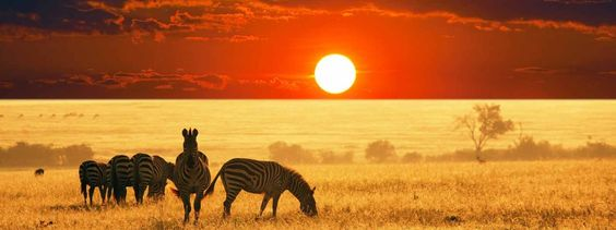 African Safari @ Global #Holidays from India >> http://www.GetsHolidays.in/